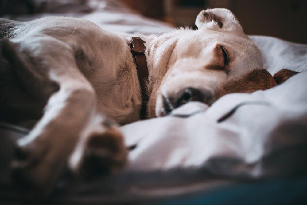 close-up-photography-of-sleeping-dog-791