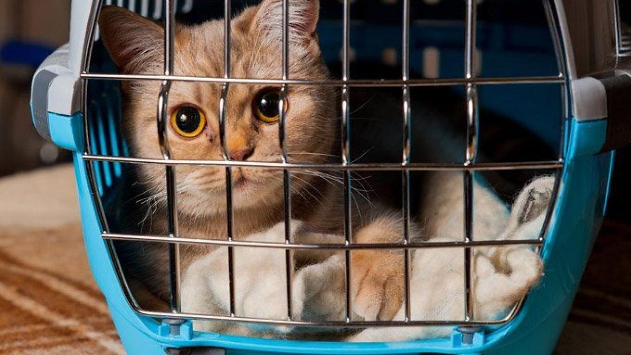 best-cat-carrier-e1565381682209-1280x720