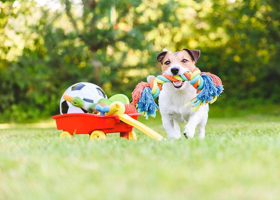 dog-toys.jpg