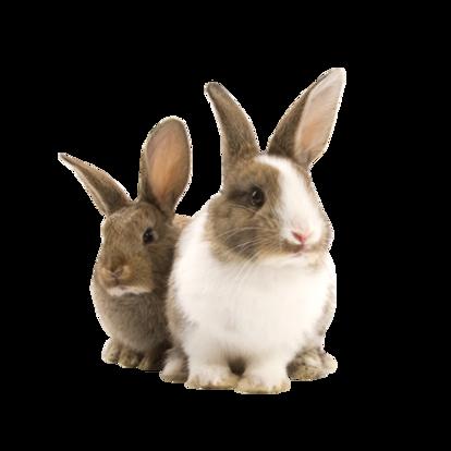 Rabbit-Free-Download-PNG.png