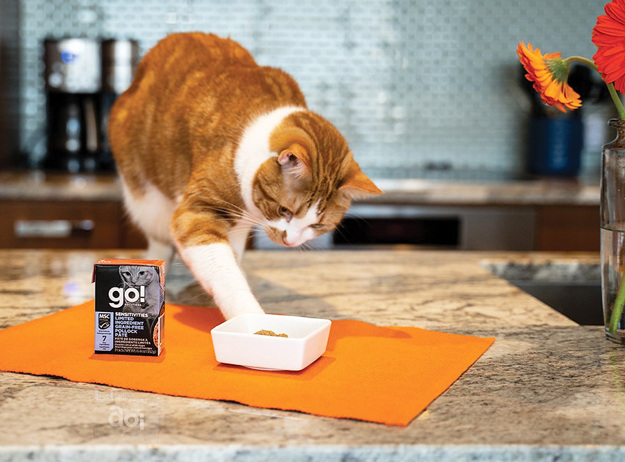 112420_Cat-products-Petcurean_Embedded.j