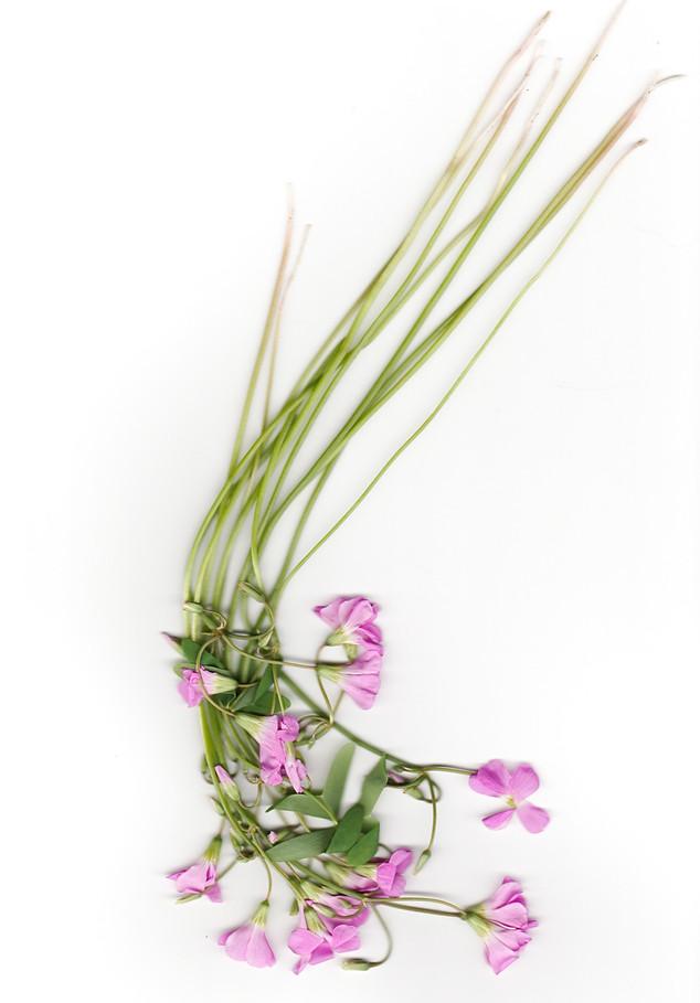 Flora 3