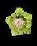succulent transparent.png