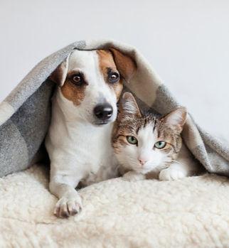 Dog-and-Cat_edited.jpg