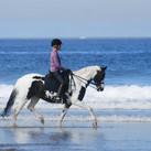 Stephanie and Confetti at the beach