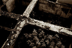The Cross, 2004, 27.5'' x 41''