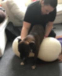 Lucy on ball.jpg