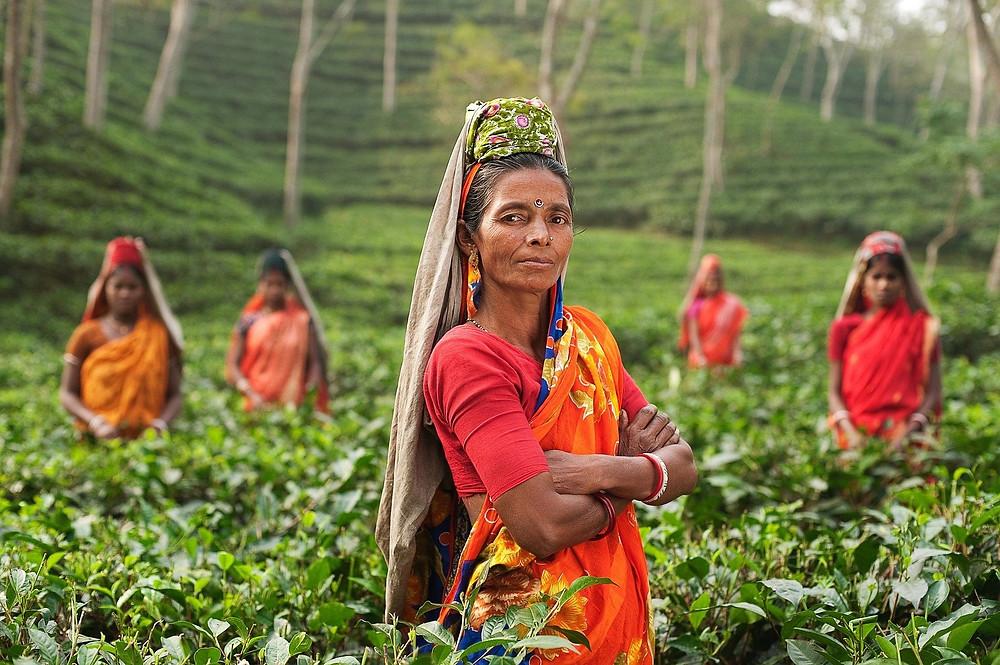 קוטפת תה במונאר שבהודו