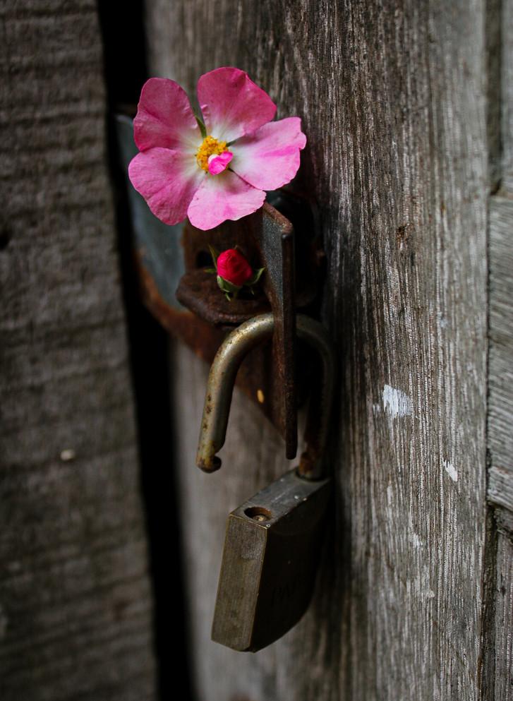 Liberdade para Flor-ir