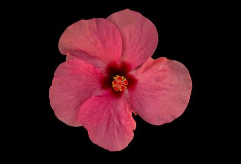 Essência da Natureza - Flor