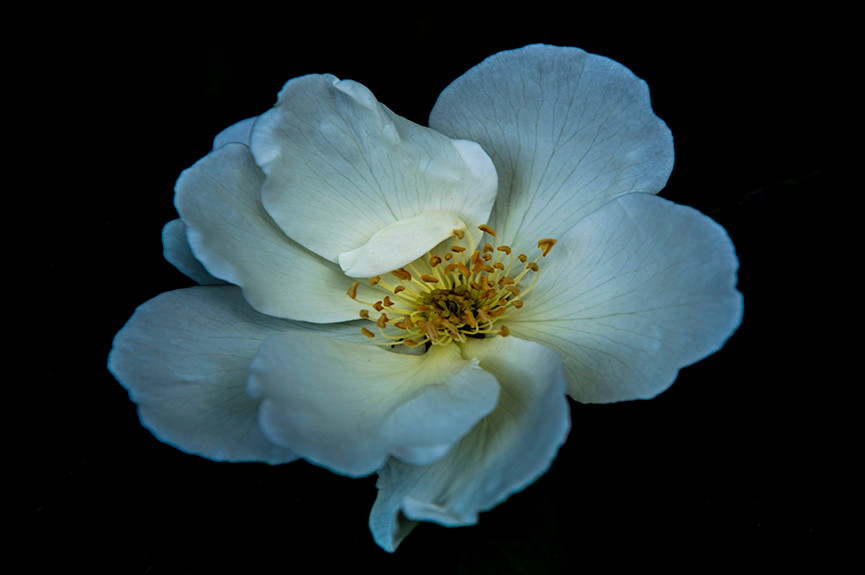 Encantamento das Flores