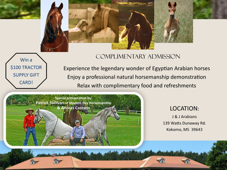 Enjoy An Afternoon with Egyptian Arabian Horses