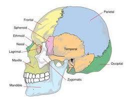 CranioSacral-Therapy-New-York-NY.jpg