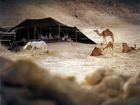 Arabian Horse Tent