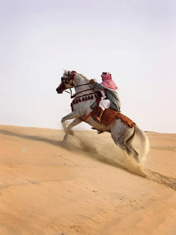 Arabian horse in the desert