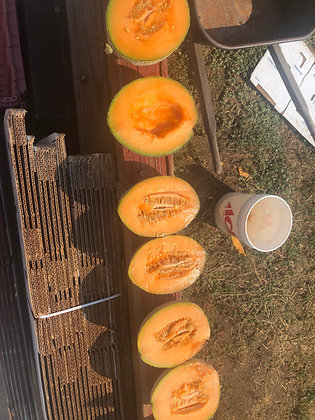 Hales Best Cantaloupe Seed