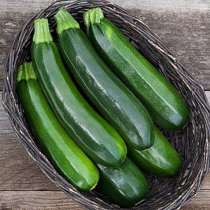 Dark Star Zucchini Plant Start
