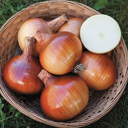 Valencia Onion- 12 plants
