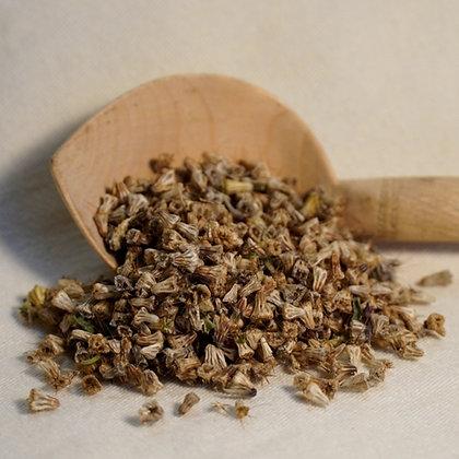 Pincushion Scabiosa Seed