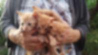 Rote Kitten auf Arm.jpg