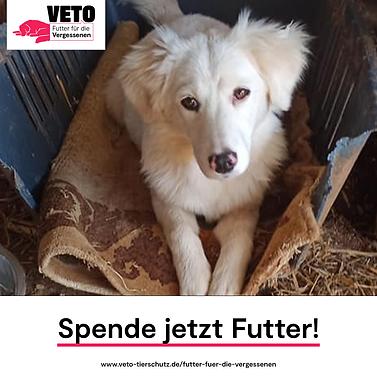 7-Futter_fuer_die_Vergessenen-Spende_jet