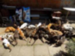 Viele Katzen.jpg