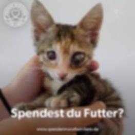 Suri_Spendest du Futter.png