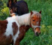 Esel Pony 2.jpg