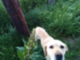 Hund mit Schlinge.jpg