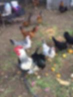 Hühner_02.2020.jpg