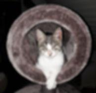 Pax im runden Kratzbaum.jpg