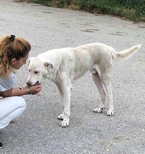 Weißre_Hund_mit_Alexia.jpg