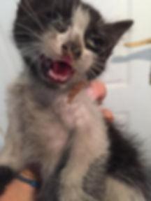 Kitten im August-Schornsteinfeger.jpg
