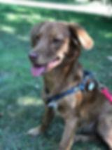 Cookie 30. juli-bereits adoptiert.jpg