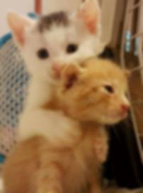 Cappy und Goldi.jpg