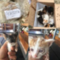 Kitten_ Fotos alle.jpg