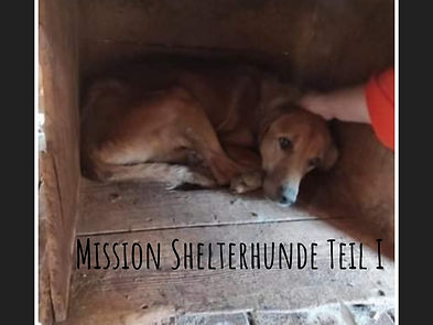 Mission Shelterhunde Teil 1.jpg