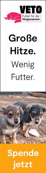 2021_Futter_fuer_die_Vergessenen_160_600