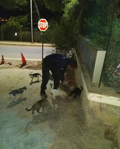 Spenden-Nikos in Katzenkolonie.jpg