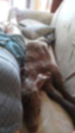 Hendrix 22.07 mit Martha auf Couchn.jpg