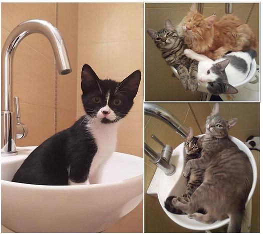 Katzen-Waschbecken.jpg