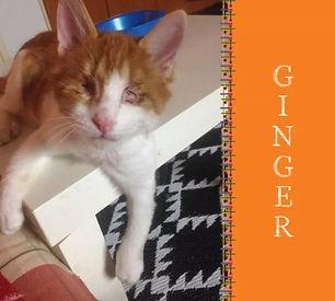 Ginger 1 mit Name.jpg