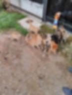 Katzen in Parnitha.jpg