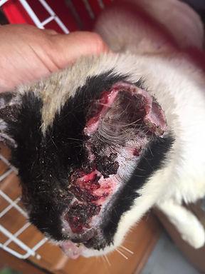 Rena_verletzte Kätzchen 6.jpg