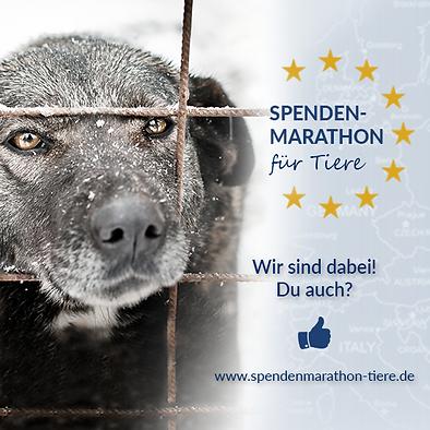 Spenden_Facebook_Profilbild_Spenden-Mara