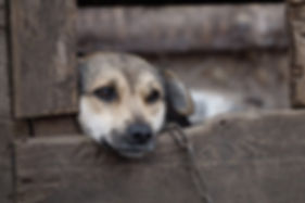 Kettenhund.jpg