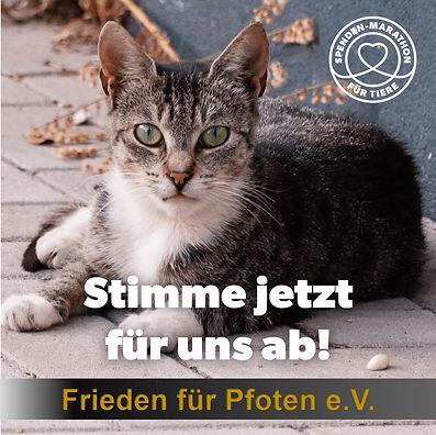 Stimme_jetzt_für_uns_ab_Katze.jpg