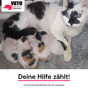 1-Futter_fuer_die_Vergessenen-Deine_Hilf