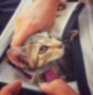 Katze schaut aus Transportbox.jpg