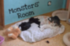Bild Monsters Room.jpg